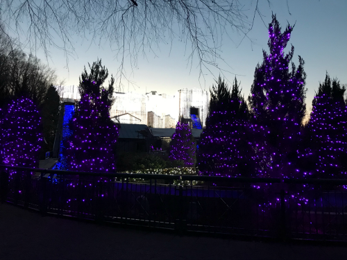 Purple and Blue Christmas trees
